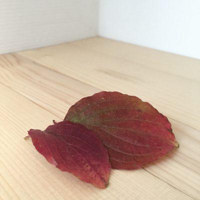 Rood herfstblad