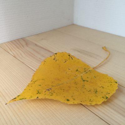 geel blad